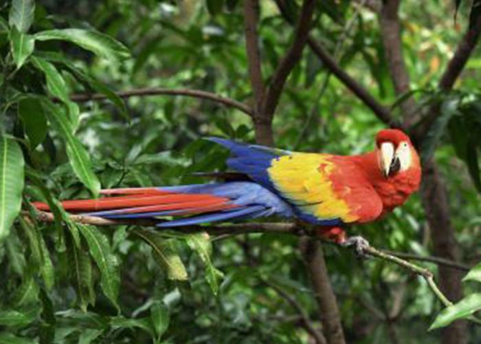 Noel 周日梅爾卡多市動物園-聖克魯斯