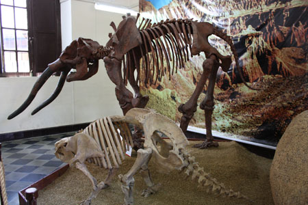 Музей палеонтологические arqueologico2